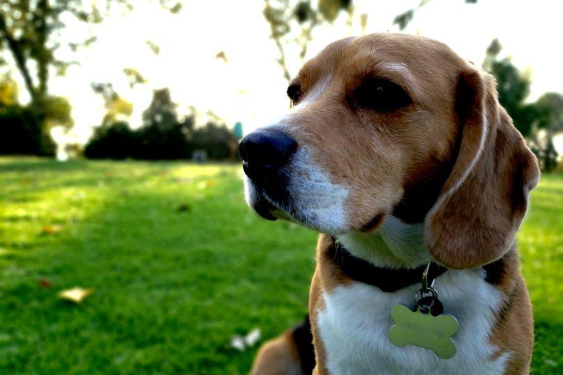 Este viernes: jornada de implantación de microchips para mascotas en Providencia