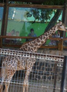 Gobierno compromete cuadriplicar terreno para el zoológico de Santiago y transformarlo en Eco-Parque