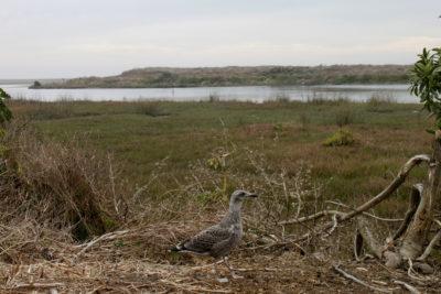 Inauguran Centro de Rescate y Rehabilitación de Fauna Silvestre en el Parque Ecológico La Isla