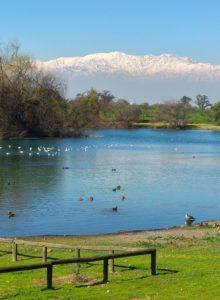 Avifauna: biodiversidad en lagunas ambientales La Farfana y Melipilla