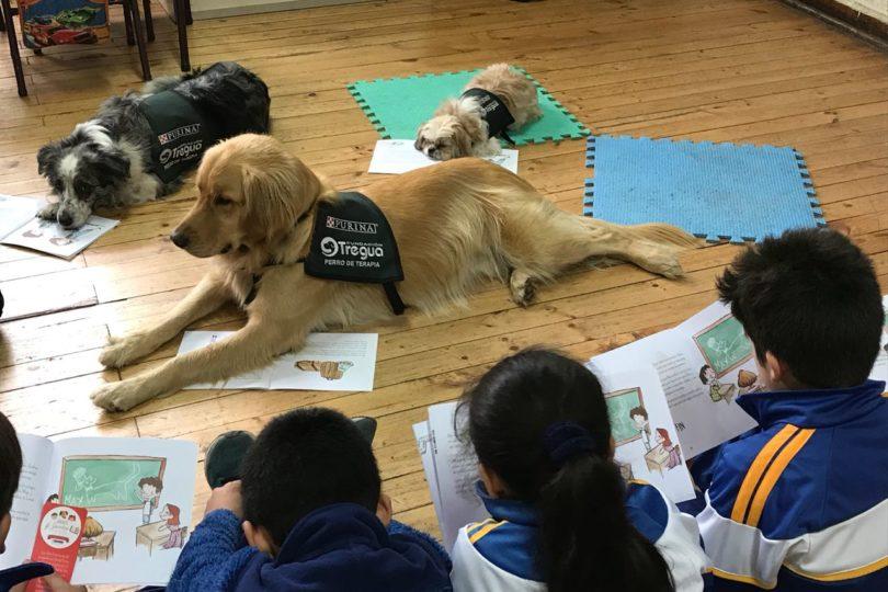 Tenencia responsable: programas internacionales arriban a Chile