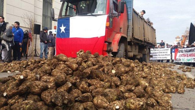 Trabajadores protestan con remolachas por eventual cierre de planta Iansa en Linares