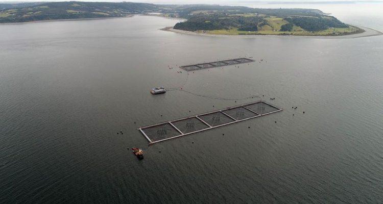 """""""Pescadores artesanales presentan querella criminal por escape de salmones"""""""