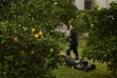 """La Moneda cuelga naranjas en los árboles para que se vieran más """"cargados"""" en visita del Jefe del gobierno español"""
