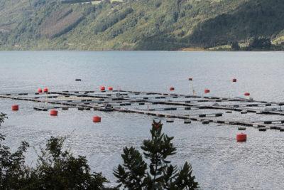 Consejo para la Transparencia ordena a salmoneras desclasificar cantidad de antibióticos utilizados