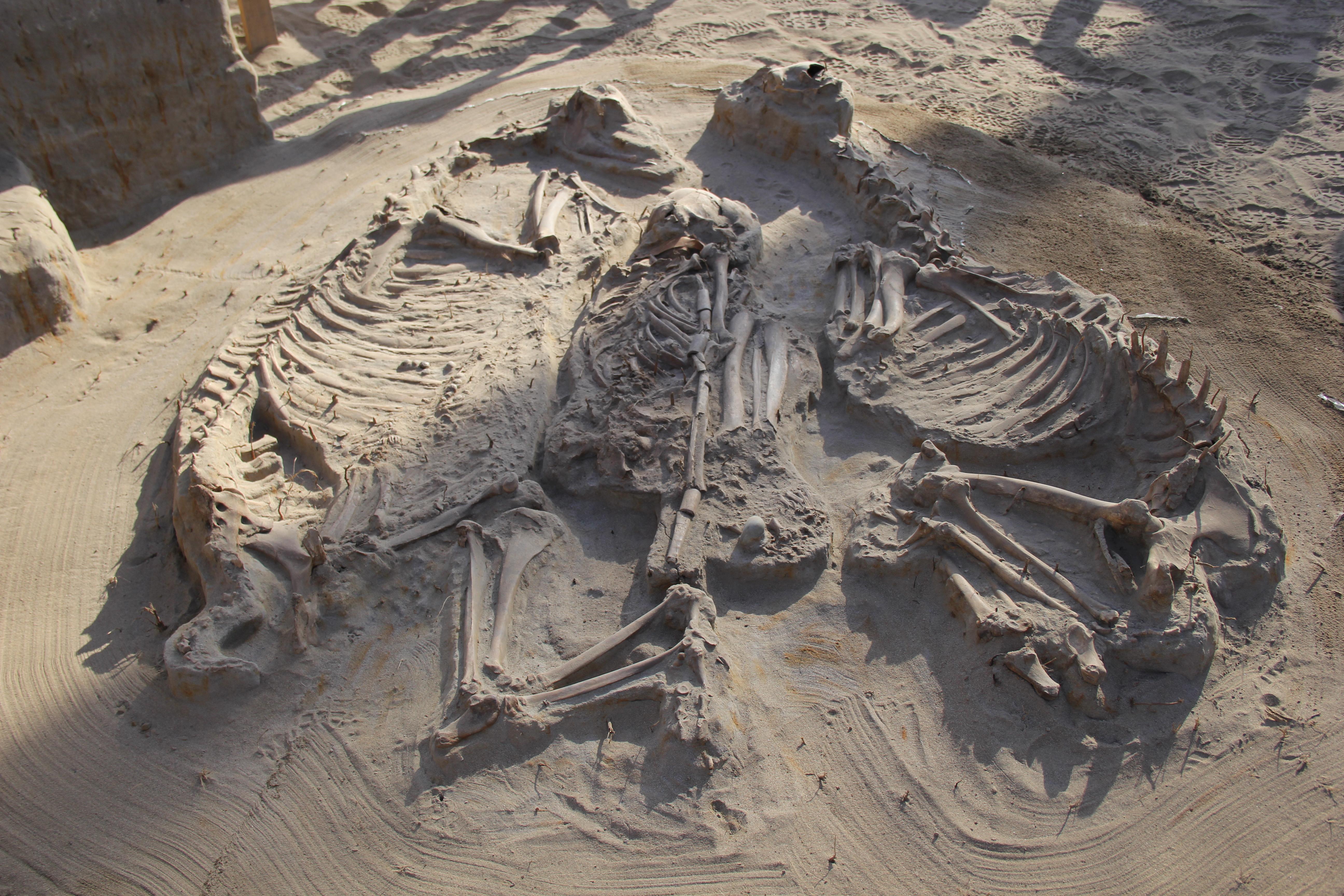 """""""Arqueólogos reescriben la prehistoria del Norte Chico tras importantes hallazgos en sitio El Olivar"""""""