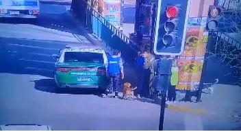 VIDEO | Carabinero mató sin piedad con un balazo a perro que lo atacó