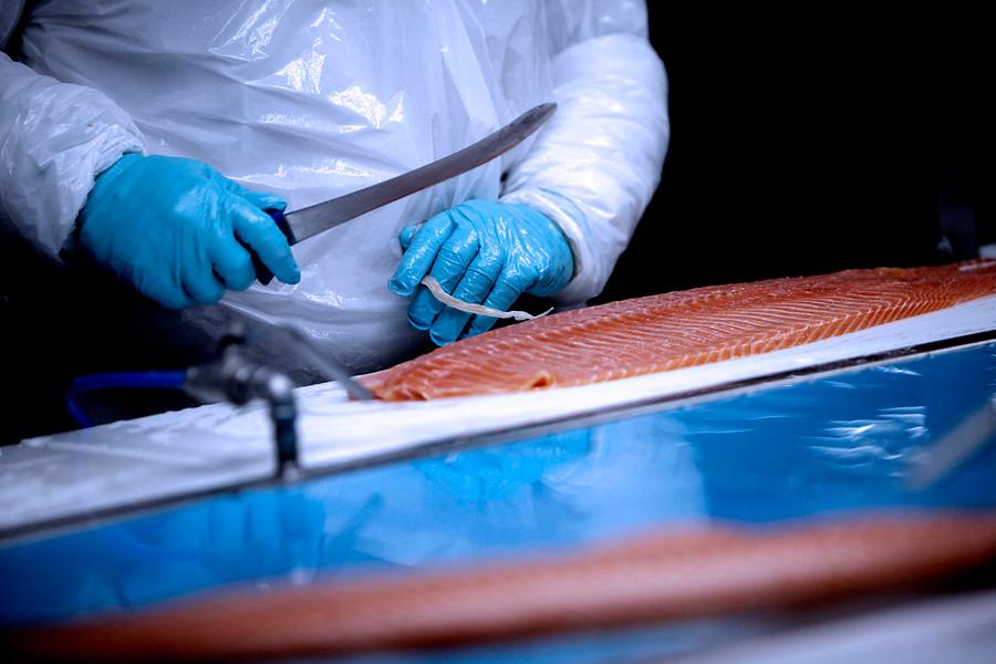 """""""Expertos coinciden en que el uso excesivo de antibióticos en salmones amenaza la salud humana"""""""