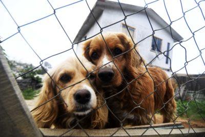 Registro Nacional de Mascotas: hay más de 65 mil inscritas desde marzo a la fecha