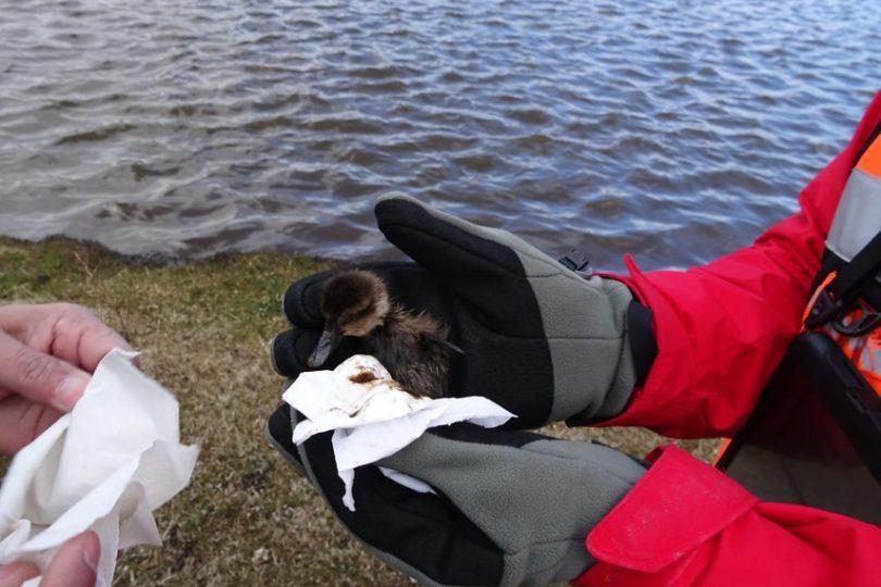 Informan derrame de 720 mil litros de hidrocarburos en Cullen