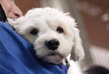 Lanzan fondos concursables para proyectos que busquen enriquecer la vida de las mascotas
