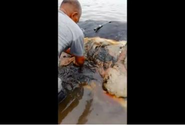 Ballena fue encontrada con más de seis kilos de plástico en su interior