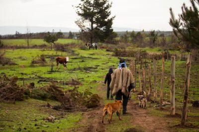 Grupo Angelini trabaja en pago compensatorio por utilización de tierras mapuche