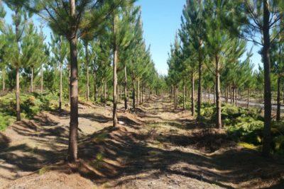 Prevención de incendios forestales: la importancia de trabajar en coordinación con la comunidad