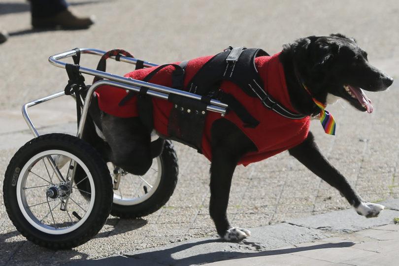 Colegio de veterinarios prepara unidad especial de rescate de animales en catástrofes naturales