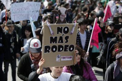 Presentan querella por maltrato animal en el rodeo por primera vez en Chile