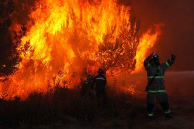 Al menos 50 casas destruidas por incendio forestal en Limache