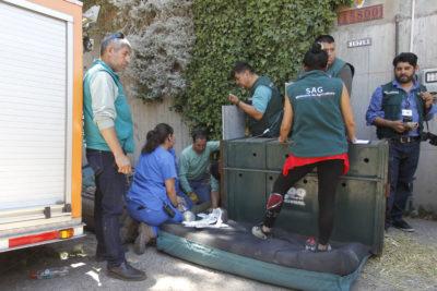 Puma de El Arrayán fue liberado en la cordillera y en perfectas condiciones