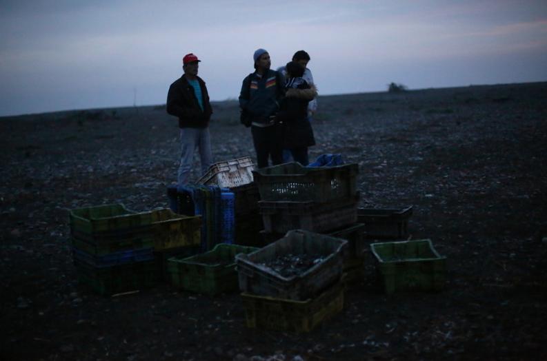 Prohíben extracción de mariscos al sur de Quellón por marea roja