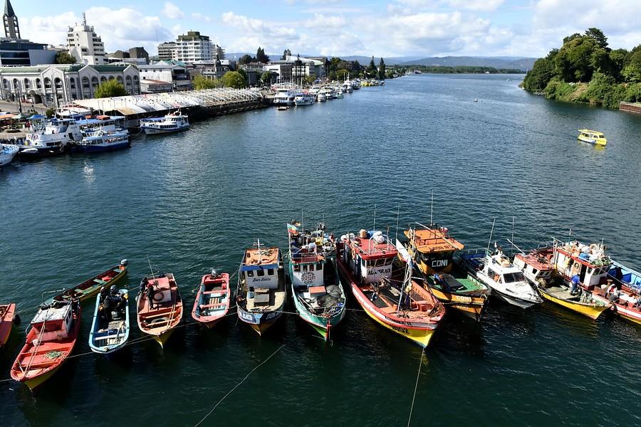 Pescadores dieron plazo hasta el miércoles para que ley de la jibia se promulgue