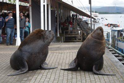 Valdivia es la mejor ciudad de Chile para vivir, luego Viña del Mar y La Serena