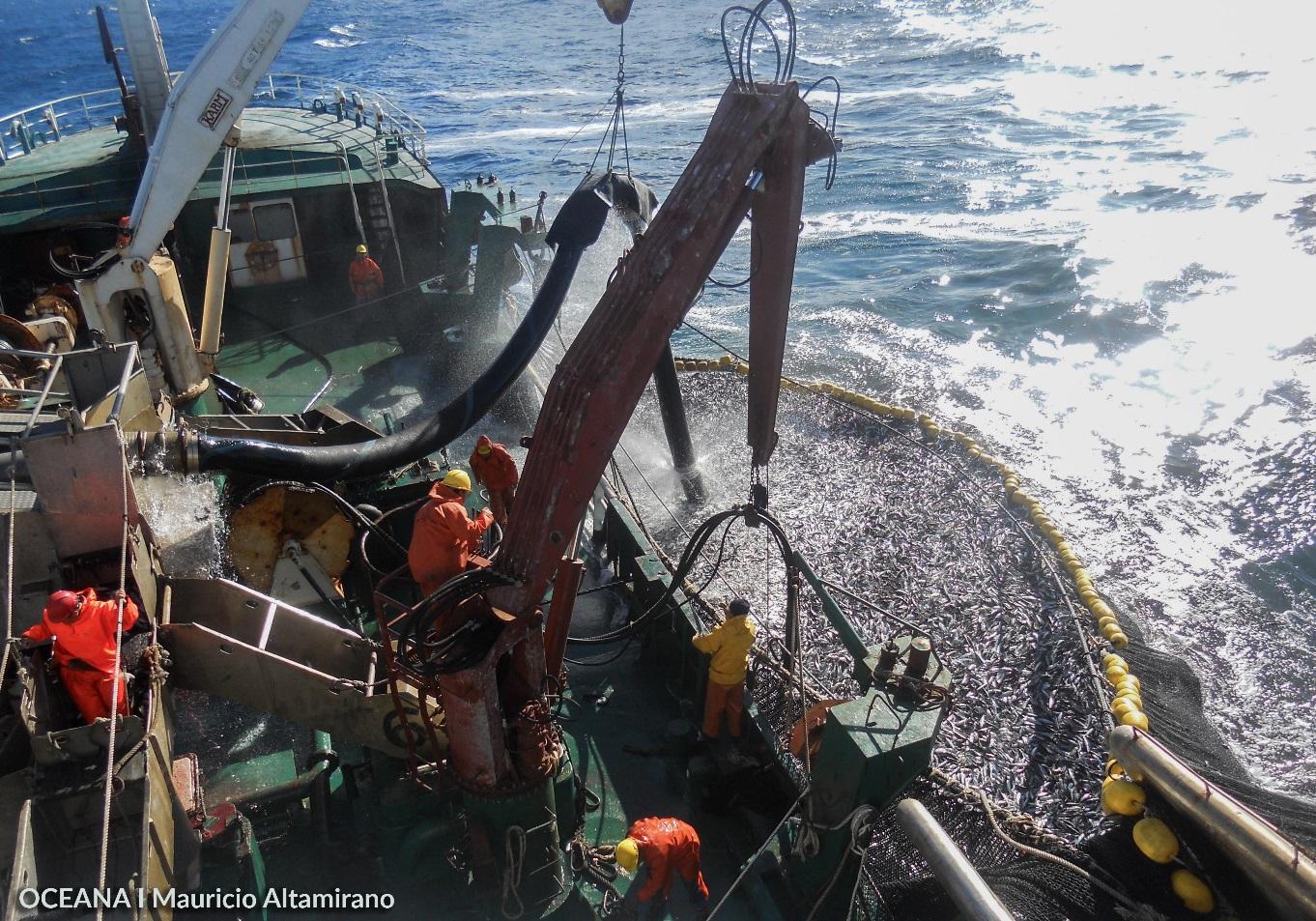 """""""Nueva ley entrega atribuciones a Sernapesca para combatir pesca ilegal"""""""