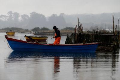 Sernapesca declara emergencia en lago Yelcho por plaga de dañiña microalga