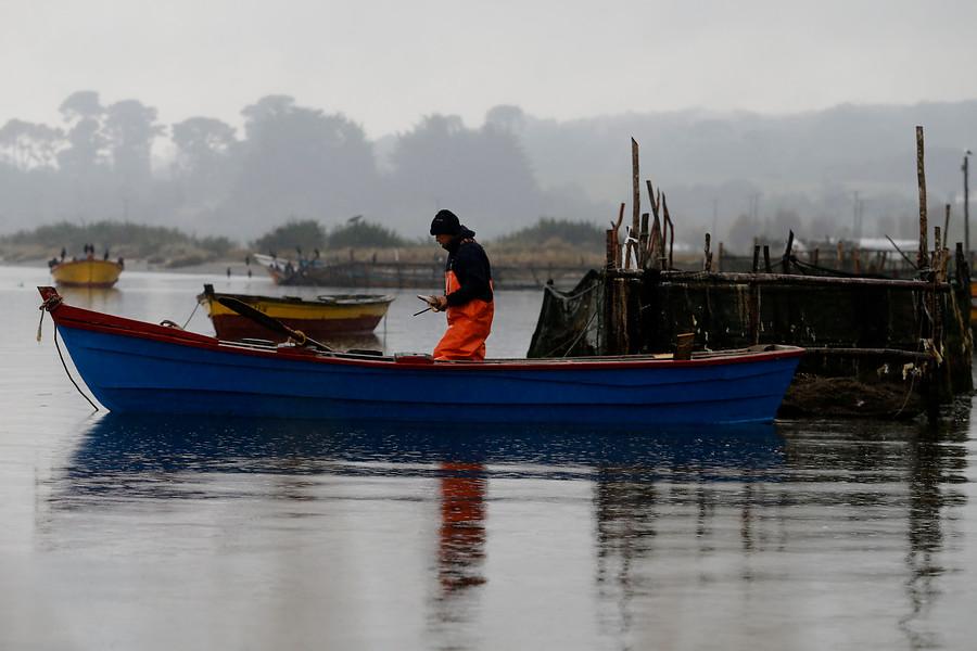 """""""Sernapesca declara emergencia en lago Yelcho por plaga de dañiña microalga"""""""