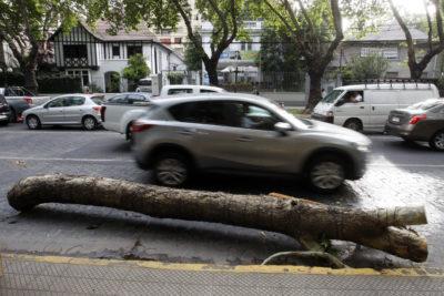 Providencia aumenta multas a inmobiliarias por árbol dañado