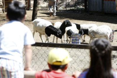 """Directora (s) del Parque Metropolitano: """"Los zoológicos hoy son más importantes que nunca"""""""
