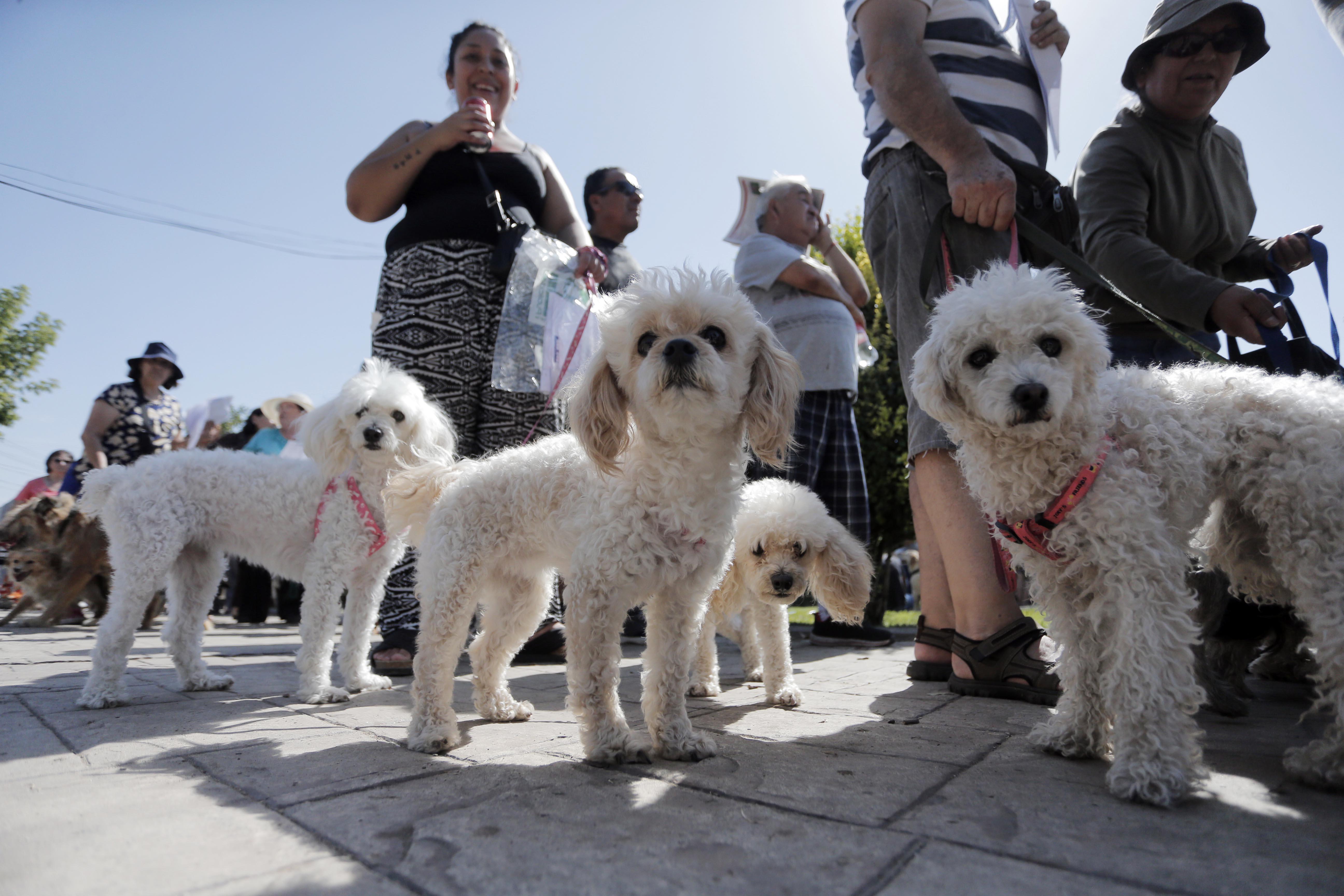 Registro Nacional de Mascotas ya supera los 200 mil inscritos