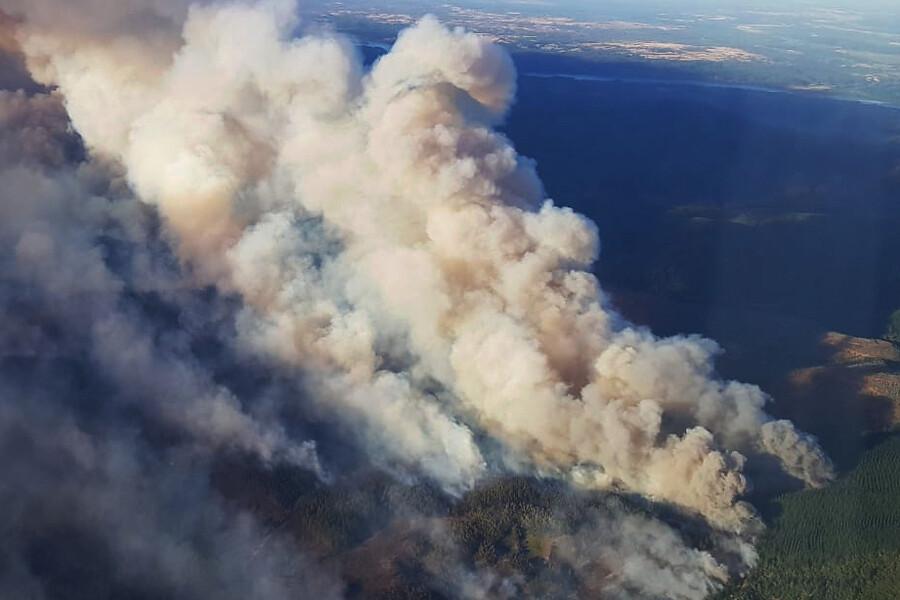 Onemi ordena evacuar sectores de Nacimiento y Coelemu por avance de incendios forestales