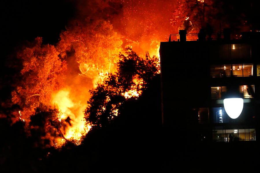Buin ZOO se suma a labores de evacuación de Zoológico Nacional por incendio en cerro San Cristóbal