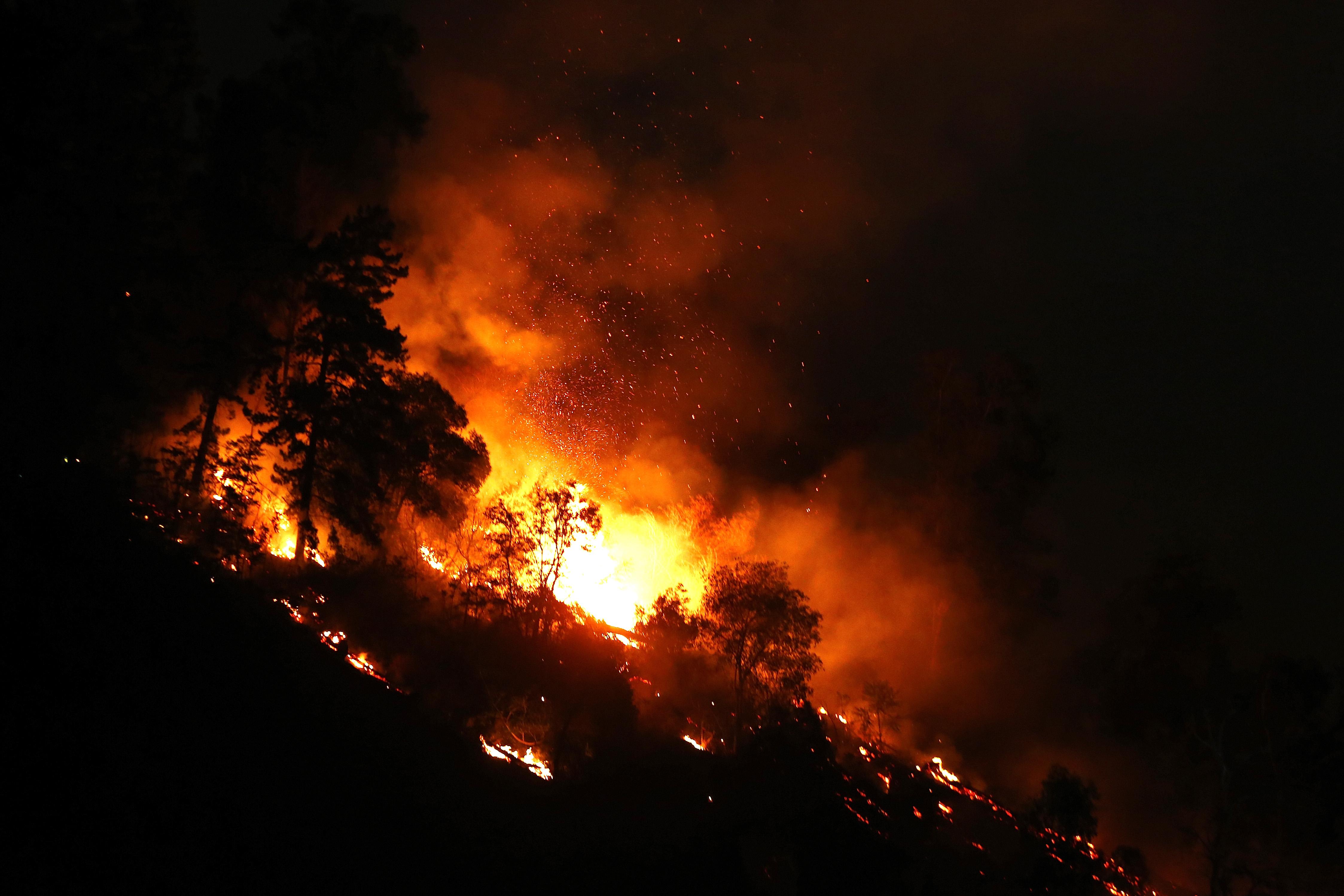 Cómo se gestó la evacuación de los animales del zoológico en medio de las llamas