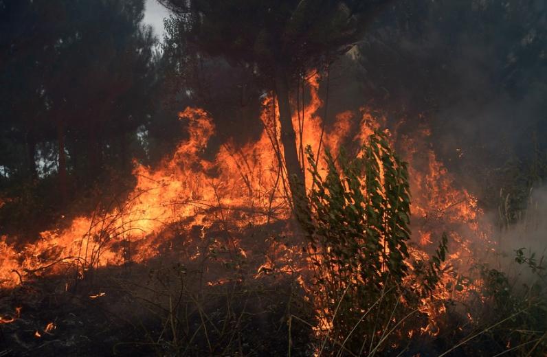 Más de 30 incendios forestales siguen consumiendo los bosques de Chile este domingo
