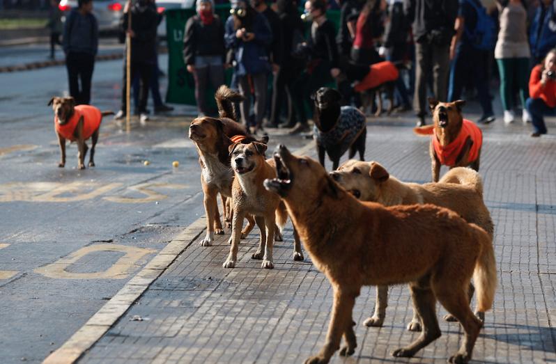 """""""Minvu: Los perros callejeros generan más temor que los robos"""""""