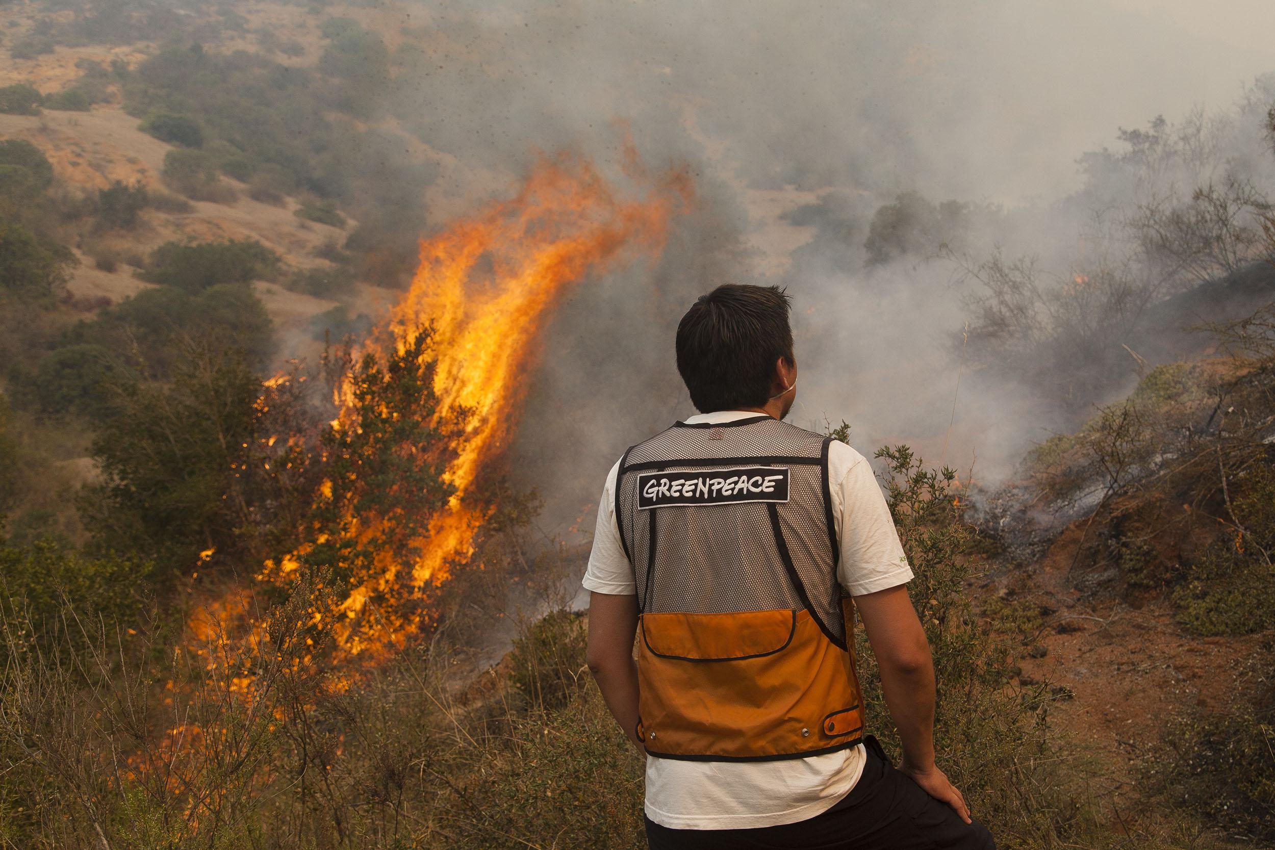 """Greenpeace en alerta: """"El cambio climático actuará como nuevo combustible para la propagación de incendios"""