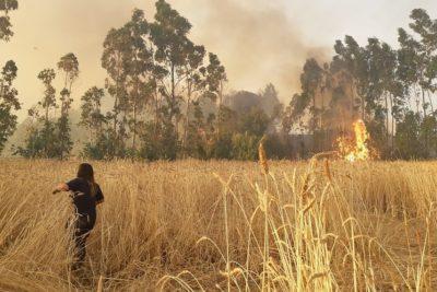 Militar a cargo de La Araucanía descarta decretar toque de queda en la zona