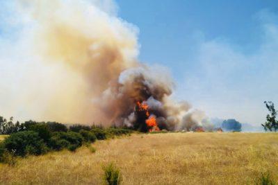 Gobierno confirma que hay 12 detenidos por incendios forestales en el sur