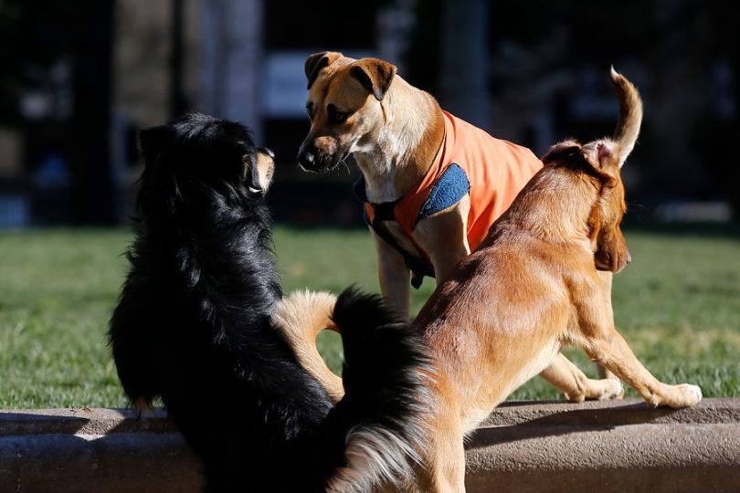 Gobierno anuncia $1.400 millones para esterilizaciones de perros callejeros