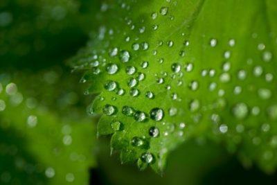 Ambientalistas y la oposición a la fotosíntesis