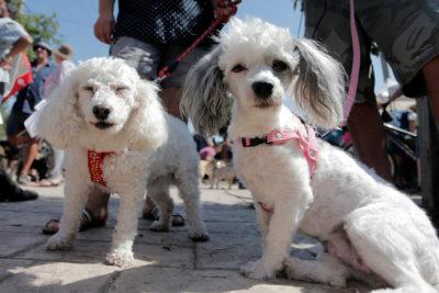 Registro Nacional de Mascotas: los nombres preferido para bautizar a perros y gatos en Chile