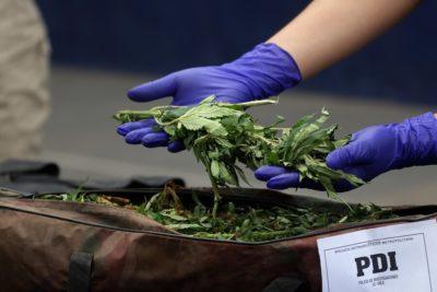 Detienen a 2 pasajeros de bus con marihuana valorada en $50 millones