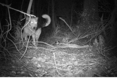 Científicos detectan nueva presencia de mamíferos invasores en siete islas de la Reserva de la Biosfera Cabo de Hornos