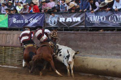 """Presidente del rodeo rechazó las críticas: """"El Champion 2019 será el Lollapalooza del deporte"""""""