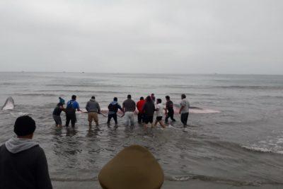 Murió la ballena que varó en una playa de Puerto Aldea
