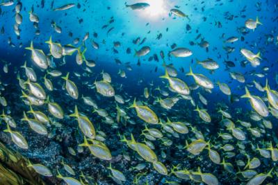 """Plataforma interactiva muestra cómo es """"Chile bajo el mar"""""""