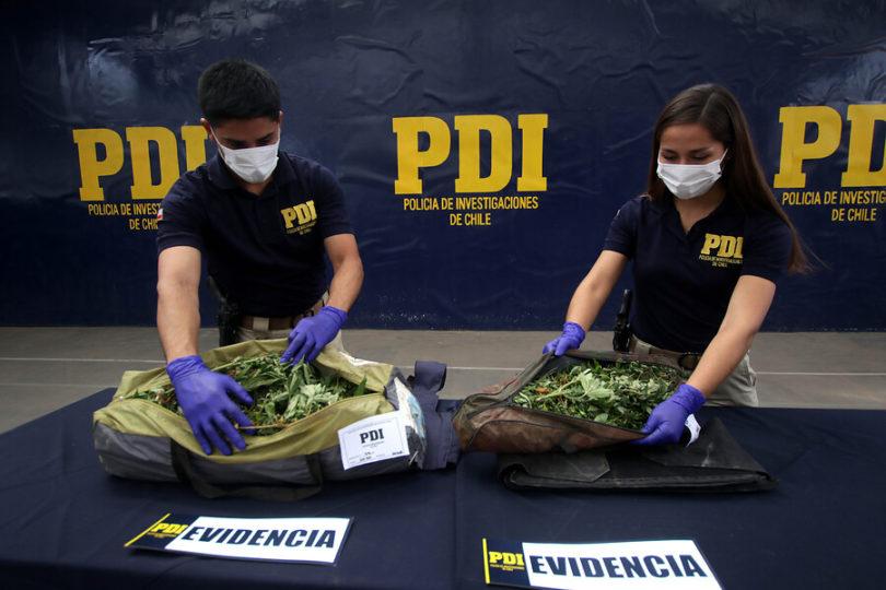 Siete detenidos por supuesto cultivo medicinal de marihuana
