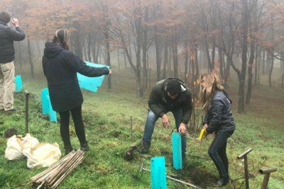 """""""Reforestemos Aysén"""": el proyecto que repoblará con 10 mil árboles nativos el Cerro Divisadero"""