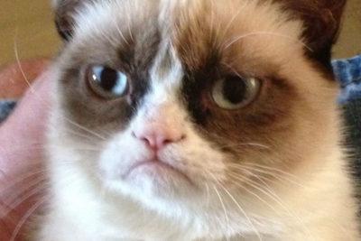 """Internet está de duelo: la famosa gata """"Grumpy Cat"""" murió a los 7 años"""